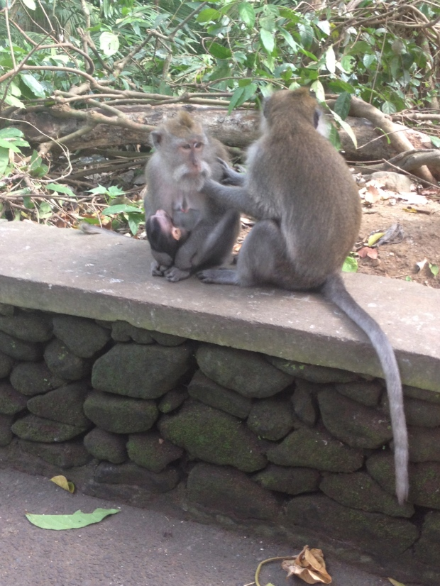 Monkey family!